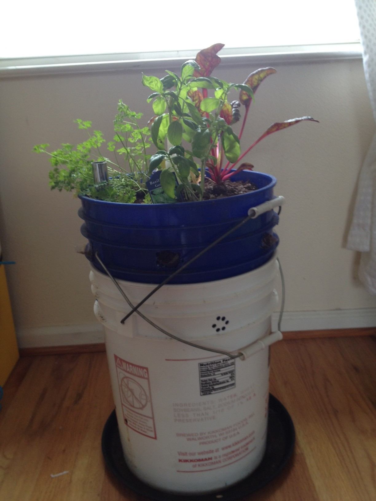 5 gallon bucket planter we - 5 Gallon Bucket Garden