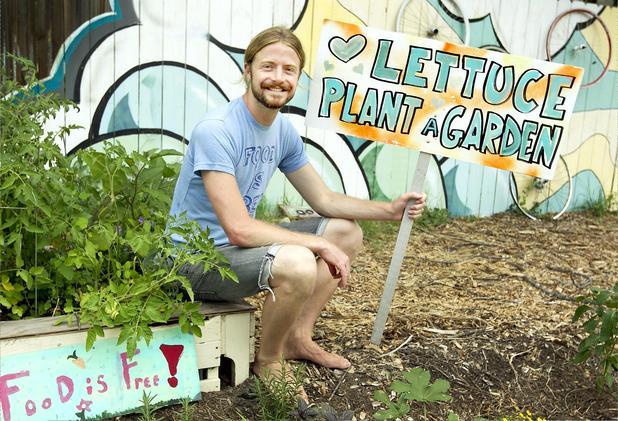 lettuce plant a garden