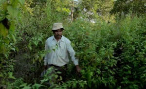 A lush forest now thrives because of Payeng.